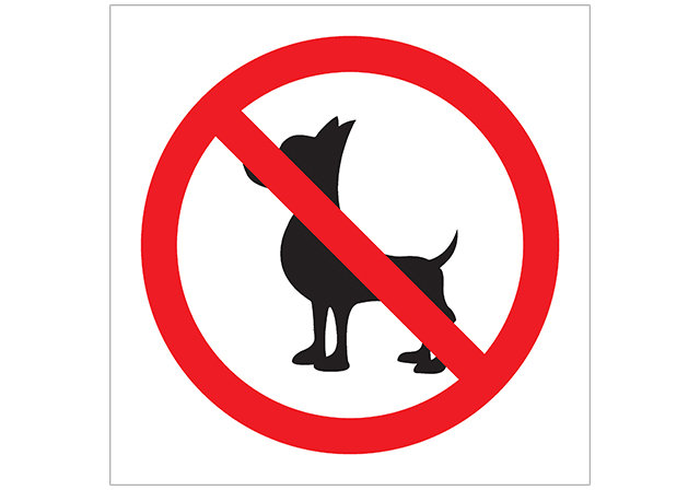 Dogs are forbidden in Maldives